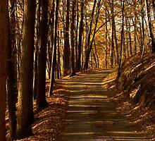 Fall Light by Walter Quirtmair