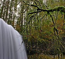 North Falls by Nick Boren