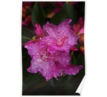 Rainy Day Azalia Poster