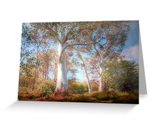 Mighty Ghost Gums - The Cedars, Hahndorf, The Adelaide Hills, SA Greeting Card
