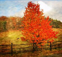 Glorious Fall In Pennsylvania by teresa731