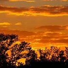 Sunset through the Trees by Rosalie Scanlon