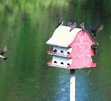 Purple Martins at Home. by barnsis