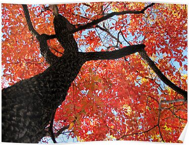 Black Gum Tree by Jean Gregory  Evans