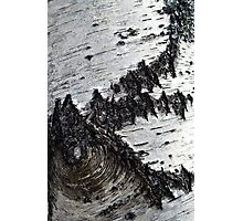 birch bark   Photographic Print