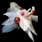 Christmas Cactus & Little Lady Bug by Grinch/R. Pross