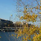 The Seine at Paris by bubblehex08