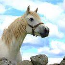 Grey Connemara Pony Mare by ConnemaraPony