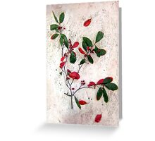 Red Berries Christmas Card Greeting Card
