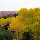 TREE OF YELLOW by ArizonaSunday