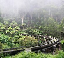 Waiting for Puffing Billy on a misty morning by mightymite
