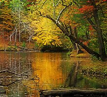 Autumn Pond II by copper4000