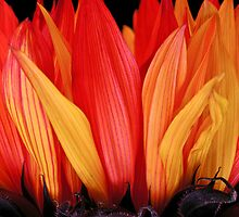 Flames by Greg Summers