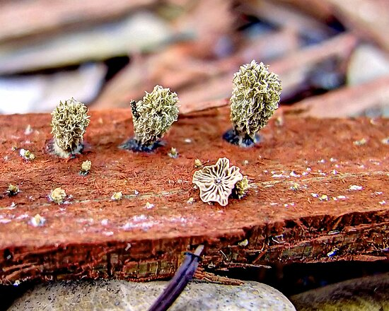 Unidentified Fungus Macro by Glenn Cecero