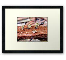 Unidentified Fungus Macro Framed Print