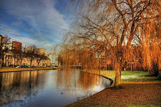 Winter Willow by Tom Gomez