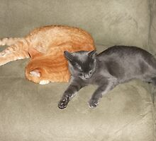 Friendship by Tracy Faught