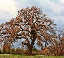My Favorite Tree by Carolyn  Fletcher