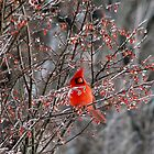 Cardinal On Ice by Carolyn  Fletcher