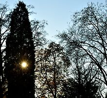 November Sun by Steve