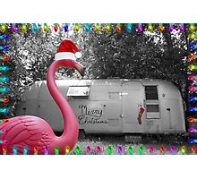 Holiday Pink Flamingo Photographic Print