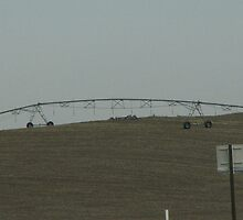 irrigation by rratledge