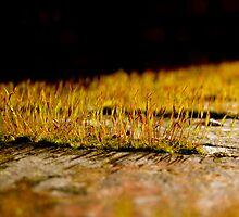 So Small, So Beautiful by George McCann