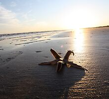 Sunshine on Starfish by Dee2west
