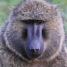 Baboon Face by Jill Fisher