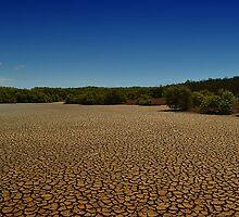 Boondall Wetlands, Queensland by David Mellor