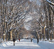 Winter Mall Central Park by andykazie