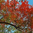 Autumn Blaze by JLBphoto