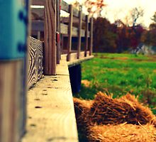Wooded trailers in a field. by patrickt309