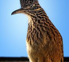 Roadrunner on my Roof by Colleen Drew