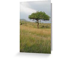 Kenyan Landscape Greeting Card