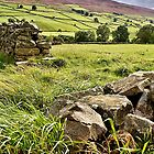 Swaledale by Mat Robinson