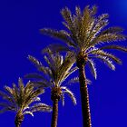 Three palms by MarthaBurns