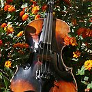 The violin by hs-photography