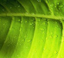 Leaf by Thad Zajdowicz