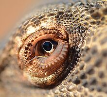 Lizard's eye by Mel  LEE