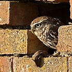 That pesky cat has left another mouse on my doorstep! by Mark Hughes