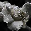 White Gardenia In The Rain by Evita