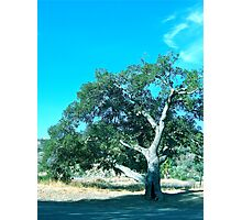 Old Tree in Blackstar Canyon Photographic Print