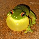 Who says I've got a double chin?... (Litoria Chloris) by Neil Ross