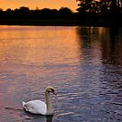 Dusk Swan by Tonberry