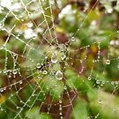 Morning Dew by Vicki Spindler (VHS Photography)