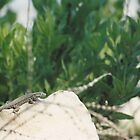 Lizard on the rock 2 by PheonixFeathers
