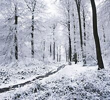 Winter Wonderland by Photokes