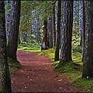 Walk this way by Kathy Yates