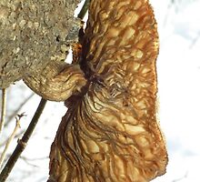 Underside of a Tree Fungus by Deb Fedeler